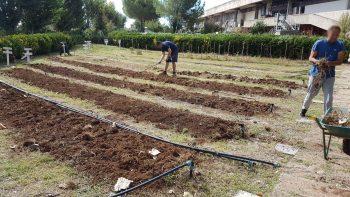 Attività in agricoltura